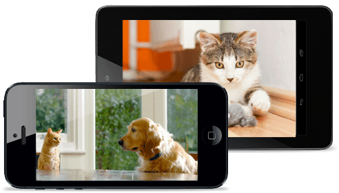 pets-video-monitoring_2
